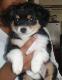 chica-puppy