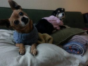 mojo-and-chica-in-sweaters